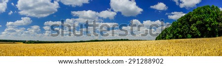 Amazing summer landscape with cereals field and white clouds.