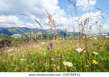 Amazing sunny day in mountains. Summer meadow with wildflowers under blue sky. Nature background and landscape - stock photo