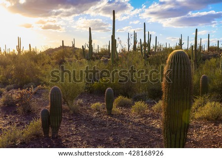 Amazing Sunset Image of Saguaro National Park - stock photo