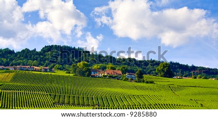 Amazing view of vineyards under blue sky