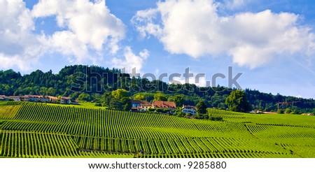 Amazing view of vineyards under blue sky - stock photo