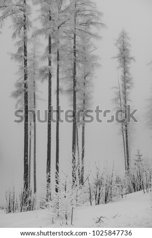 Amazing winter forest. Misty scenery.