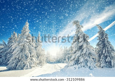 amazing winter landscape - snowfall, sunlight and blue sky