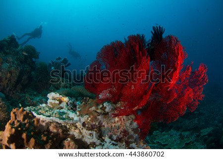 Amazingly beautiful underwater view, with a rich life of the soft and hard corals and silhouette of a diver behind. Indonesia, Nusa Penida. - stock photo