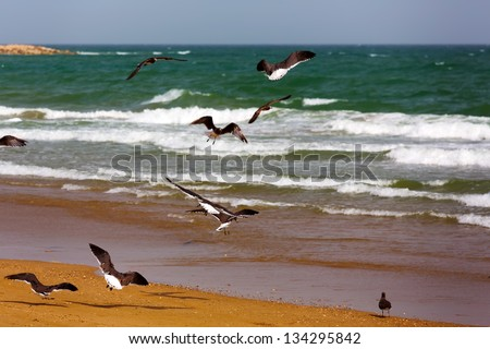 Amazingly beautiful Yiti beach with sea gulls near to Muscat, Oman - stock photo