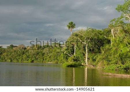 Amazon Jungle at Lake Sandoval, Peru - stock photo