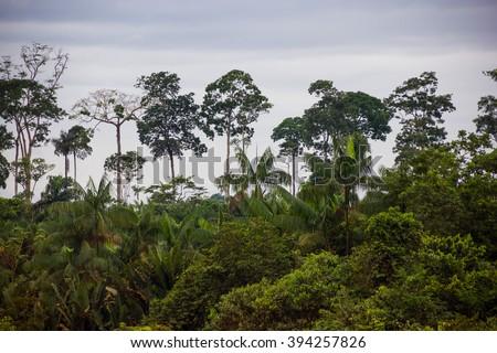 Amazon Rain forest, Brazil - stock photo