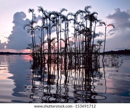 Amazonian rainforest. Laguna Grande, National Park Cuyabeno. Ecuador - stock photo
