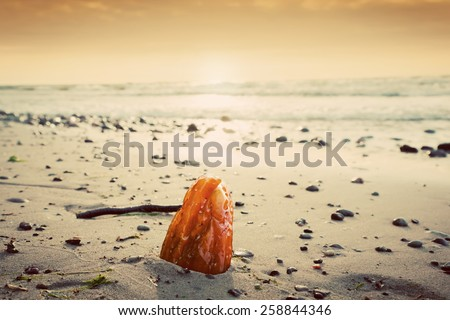 Amber stone on the beach. Precious gem, treasure concept. Baltic Sea, Poland. - stock photo