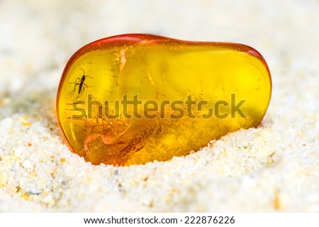 Amber with embedded insect - stock photo