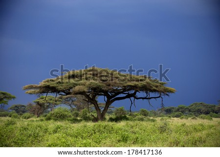 Amboseli during sunset and with storm clouds in background - stock photo