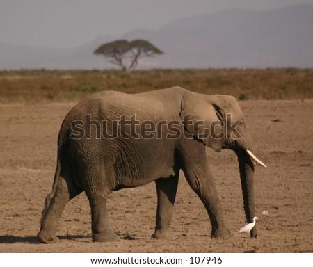 Amboseli elli boys 10,04 - stock photo