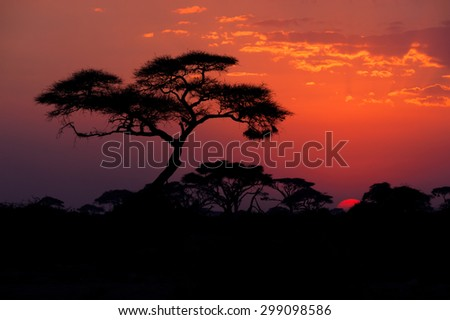 Amboseli National Park at dusk - stock photo