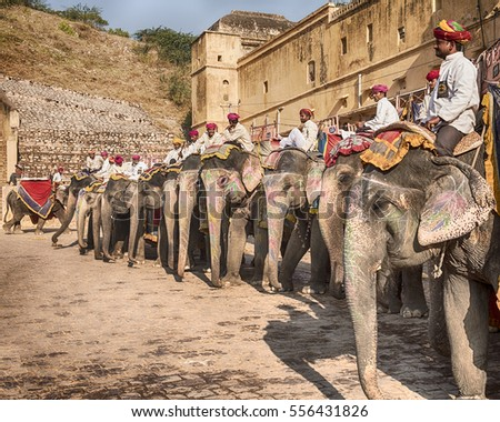 AMER, INDIA - NOVEMBER 18, 2016: A row of elephants with their riders, or mahouts, waits for tourists to make the climb up to the Amber Fort in the city of Amer near Jaipur, India.