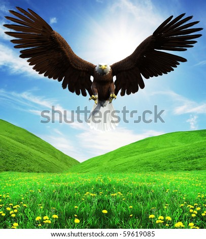 American Bald Eagle Hunting Front Attack Stock ...