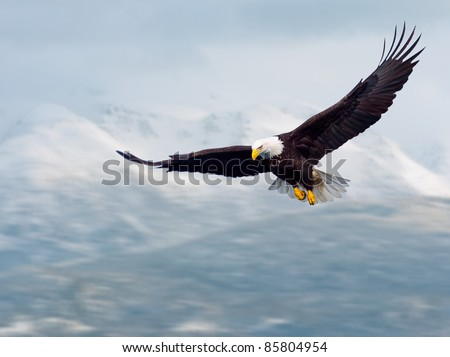 american bald eagle in flight and illustrated over alaska coastal mountains in winter, nice light on face - stock photo
