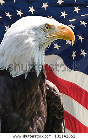 American bald eagle with the flag of the United States of America in the background - stock photo