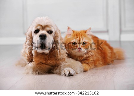 American cocker spaniel and red cat together on floor in room - stock photo