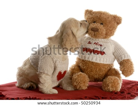 american cocker spaniel puppy kissing teddy bear wearing matching shirts with reflection on white background - stock photo