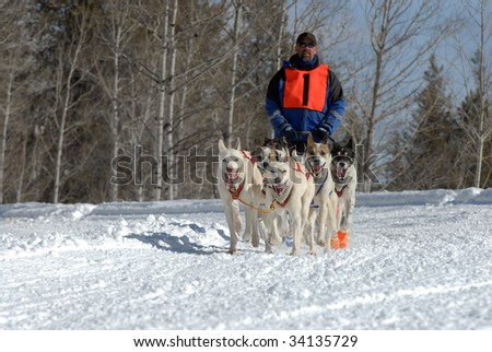 American Dog Sled Race on a Snowy Mountain Pass - stock photo