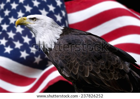 American eagle with flag - stock photo