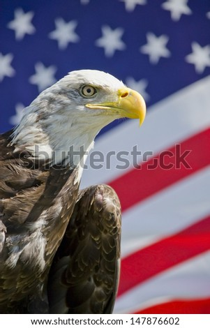 American flag with bald eagle - stock photo