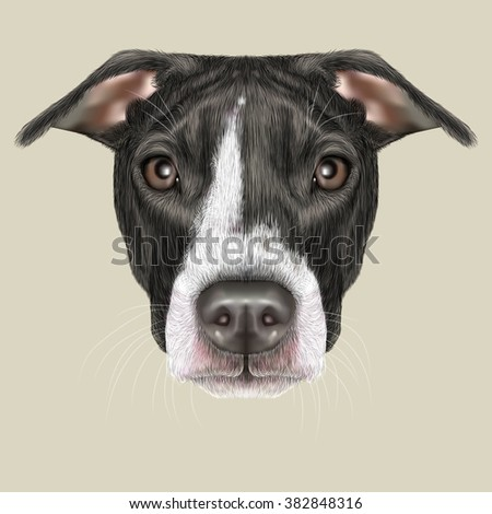 American Pit Bull Terrier Portrait. Illustrated portrait of Dog on grey background.