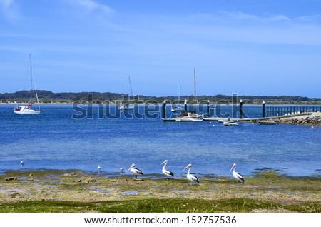 American River, Kangaroo Island - stock photo