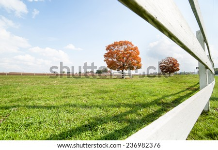 American rural landscape, fall color tree through white wooden fence. - stock photo