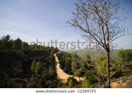 Aminadav Forest in Central Israel; Israeli Nature - stock photo