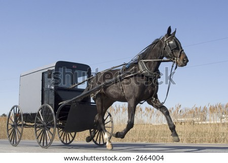 Amish Buggy - stock photo