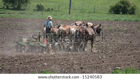 Amish Farmer Planting Corn with a Horse Pulled Planter - stock photo