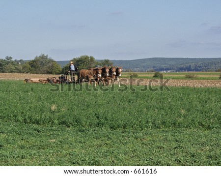 Amish Harvest - stock photo