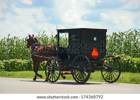 Amish horse - stock photo