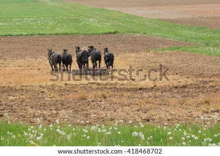 Amish man plowing a field with a team of horses - stock photo