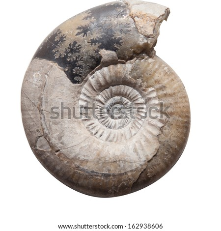 Ammonite fossil embedded in stone for Oil, Fuel & Petroleum in refinery factory  - stock photo