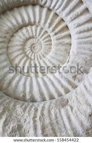 ammonite prehistoric fossil on the surface - stock photo