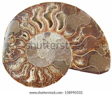 Ammonite stone isolated on white background - stock photo