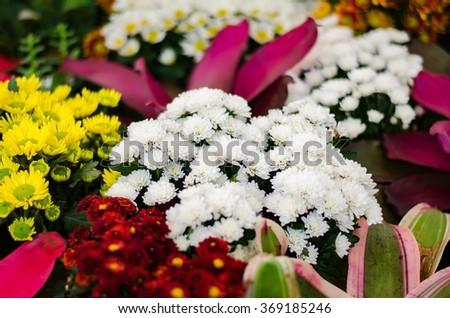 Among the flower garden - stock photo