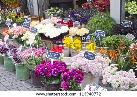Amsterdam flower market - stock photo