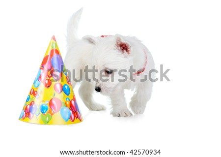 Amusing   white puppy with  red ribbon , portrait