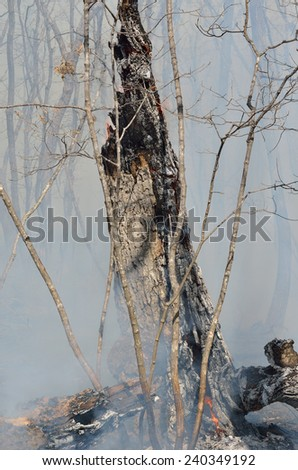 An ablaze tree in forest fire. Early spring. - stock photo