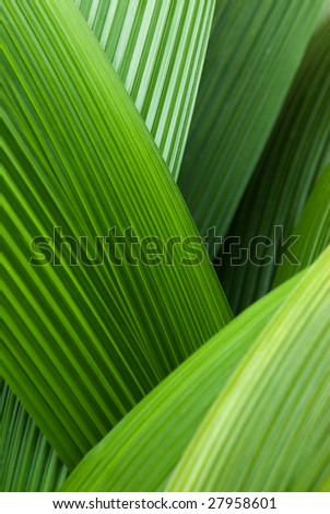 An abstract image of palm leafs - stock photo