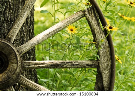 An abstract of a vintage wagon wheel with Black-Eyed Susans in the summer - stock photo