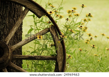 An abstract of a wagon wheel with Black-Eyed-Susans blooming around it in the morning Summer light. - stock photo