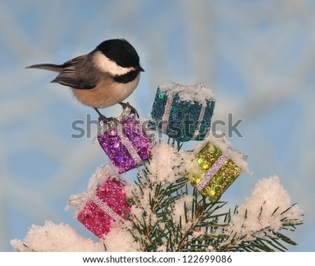 An adorable Black- capped Chickadee (Poecile atricapillus) trying to figure out what he got for Christmas. - stock photo