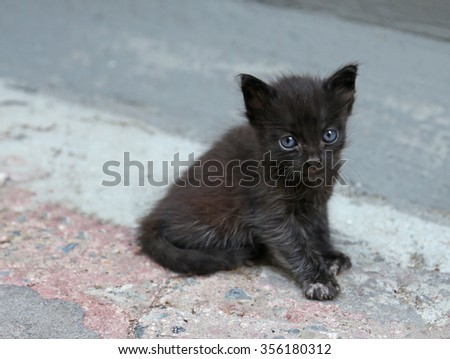 An adorable blue eyed, black kitten posing in an alley.  - stock photo