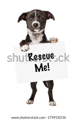 An adorable little black and white mixed breed puppy holding up a blank white sign to add your marketing message to - stock photo