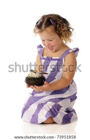 An adorable preschool girl laughing as she holds a nest with a blue and white bird.  Isolated on white. - stock photo