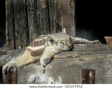 An adorable squirrel sleeping and relaxing under the sun after doing some hard work